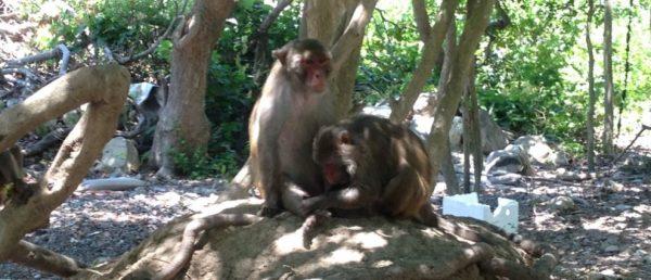 đảo khỉ suối hoa lan nha trang