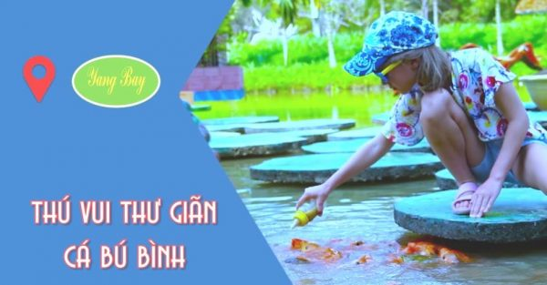 Cho cá bú bình Yang Bay