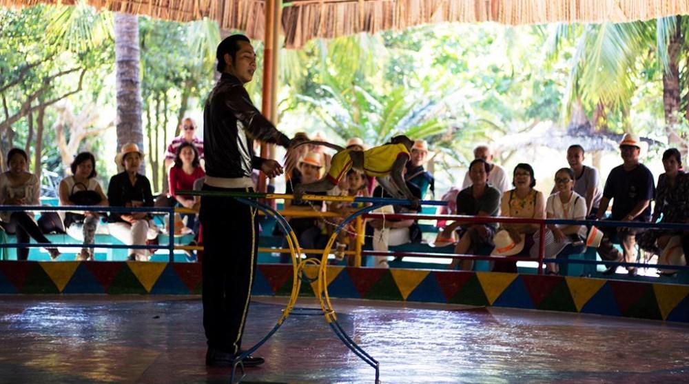 xiếc động vật trên đảo Hòn Lao - Đảo Khỉ