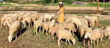 Tour Bình Hưng – Đồng Cừu suối Tiên – Vườn Nho Ninh Thuận