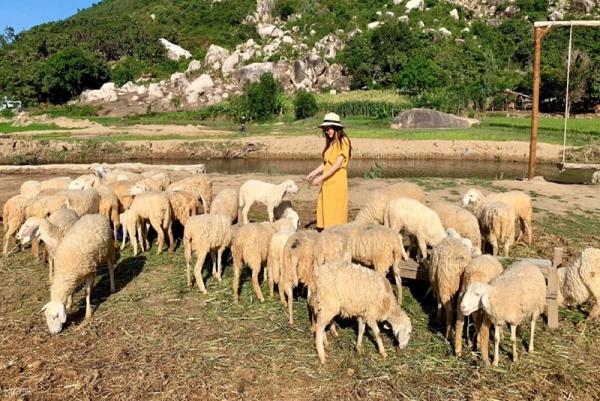 tour đồng cừu suối tiên