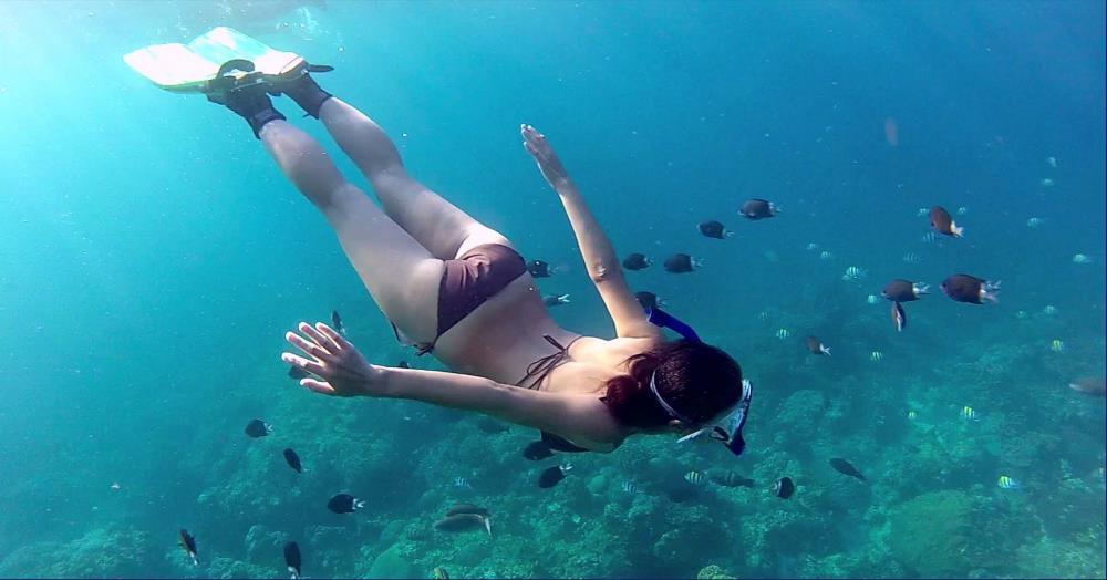 Bơi xem san hô snorkeling
